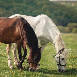 Clipex® Equine